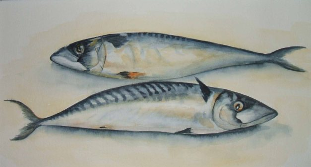 Gillian Bathmaker - 'Brace of Mackerel'