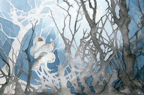 Jo Gittins - Barn Owl by Moonlight